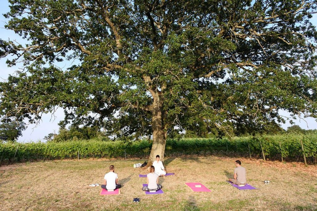 Integral yoga lesson among the rows of a vineyard at Masseria Croce Piccola in Puglia