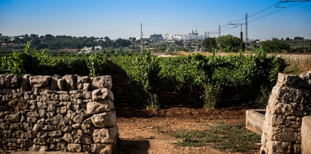Visit the vineyard of the I Pastini winery