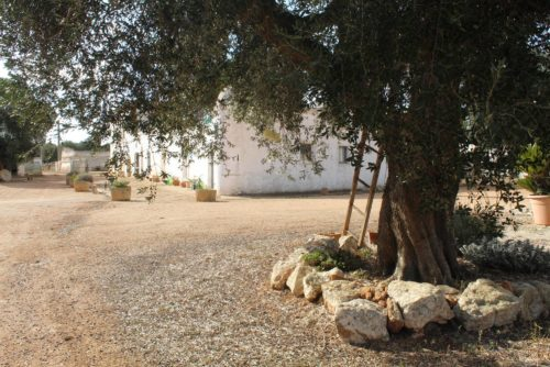 Organic extra virgin olive oil and wine tasting tour