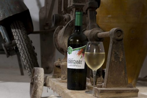 Winery tour with tasting in Puglia