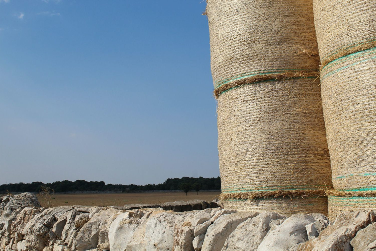 Grain production in Puglia