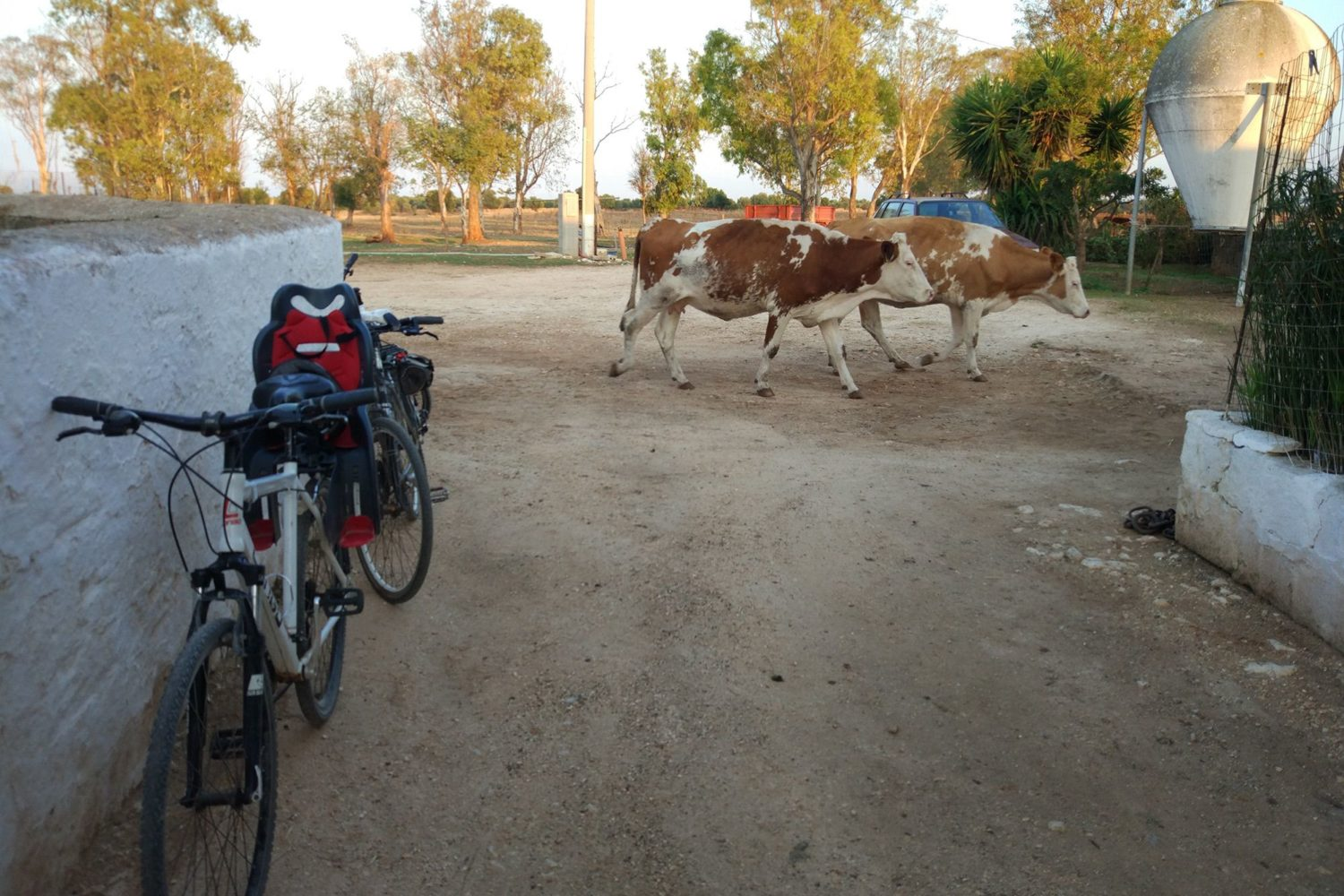 Cheese bike tour in Puglia