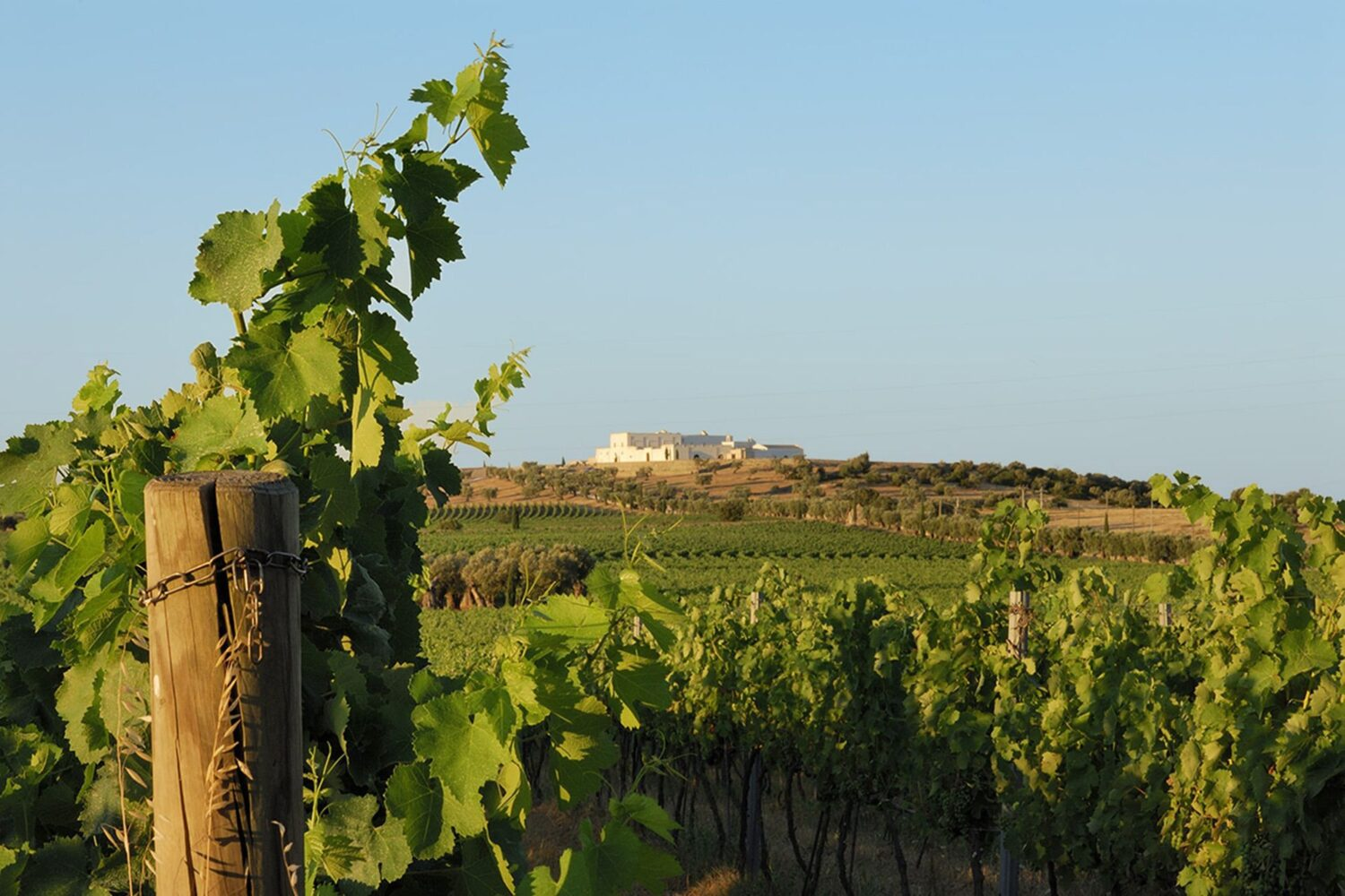 Best wines from puglia