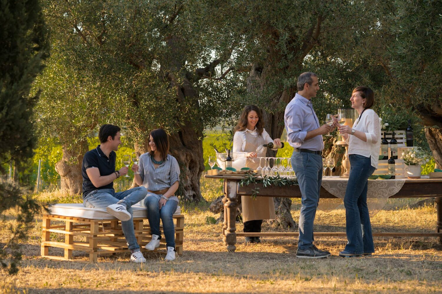 Tasting in olive grove trees