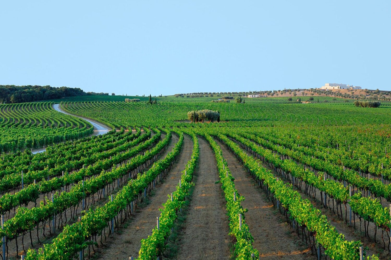 Tour vineyard puglia