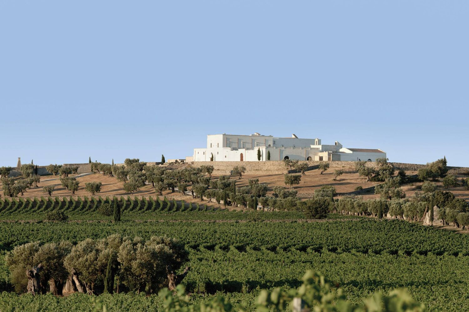 Wine guided tour puglia