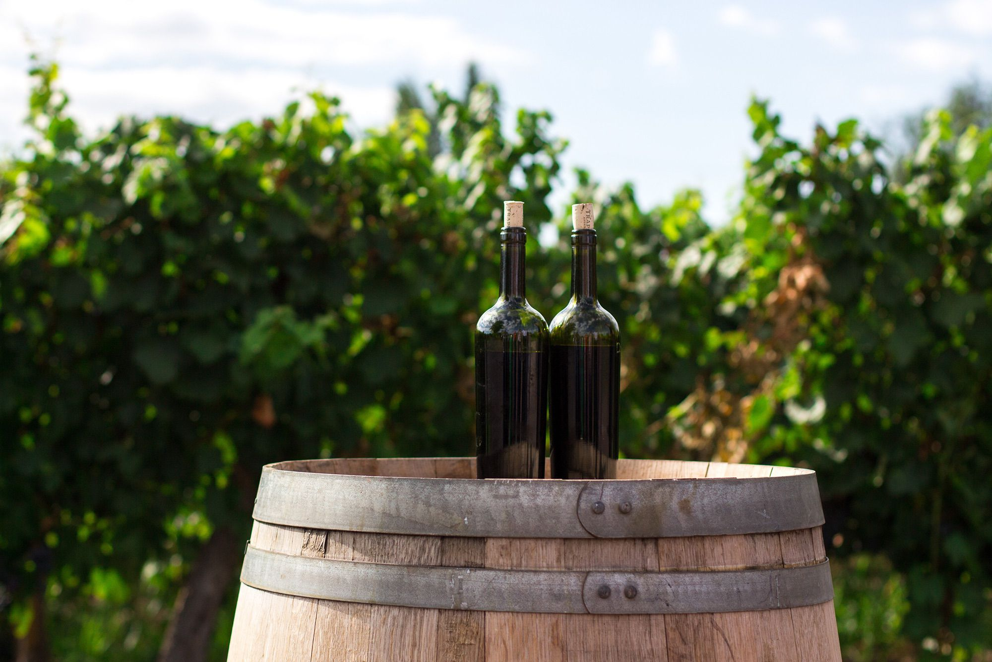 Local wine tasting holiday 2021 Puglia
