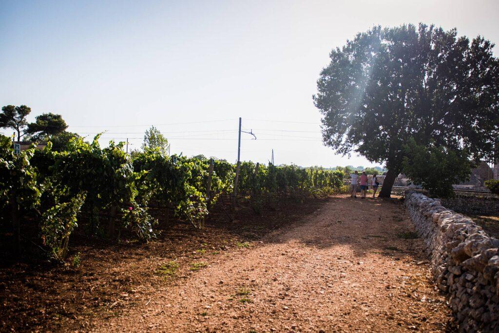 taste-wine-puglia-terrachevive