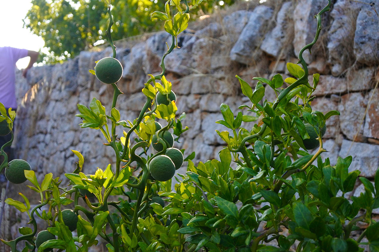 I Giardini di Pomona, Puglia, Italia.