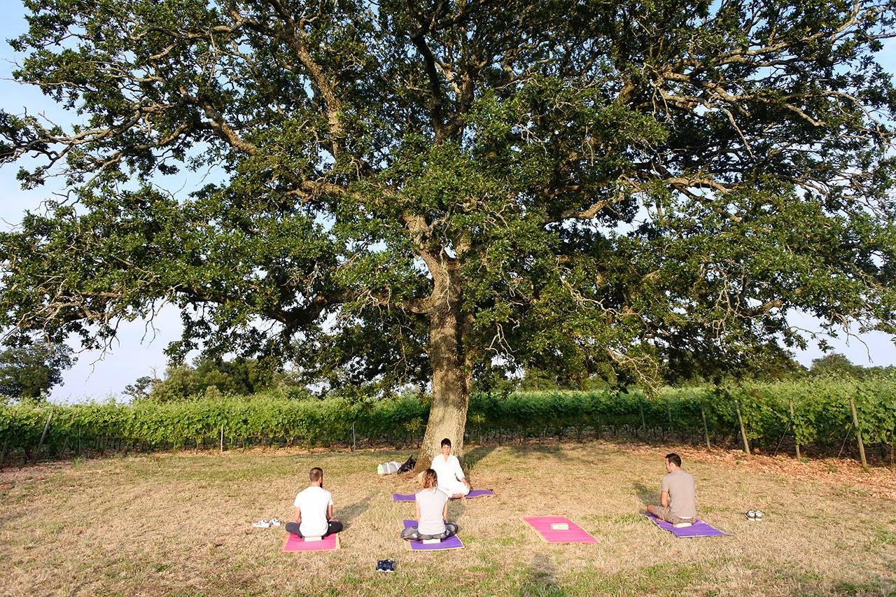 Lezione di yoga integrale tra i filari di un vigneto a Masseria Croce Piccola in Puglia