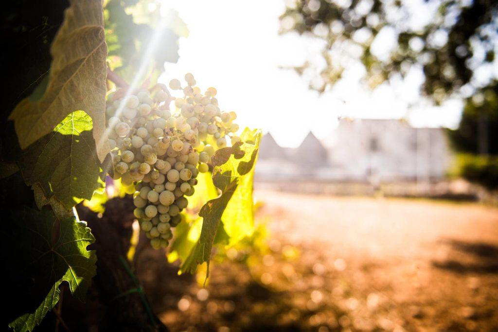 I migliori vini della Puglia