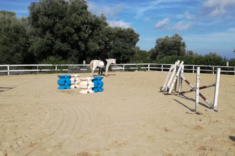 Passeggiata a cavallo tra gli ulivi millenari