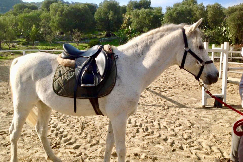 Cavallo pony escursioni Puglia