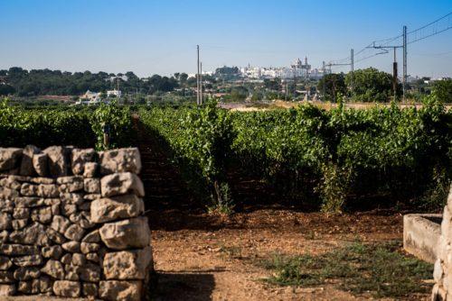 Degustazione vino in Puglia