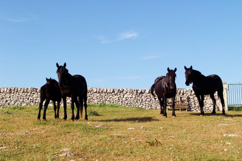 Attività con animali in masseria Puglia
