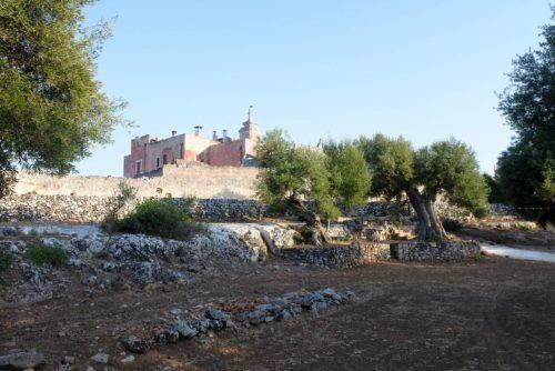 Visita con degustazione di vino Puglia