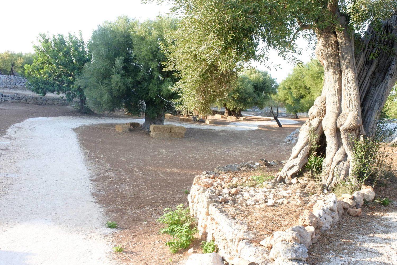 Masseria Puglia con uliveto secolare