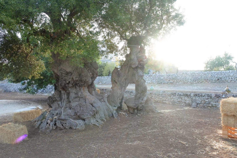 Tour guidato di una masseria della Puglia