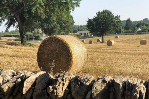 Covoni di paglia Puglia