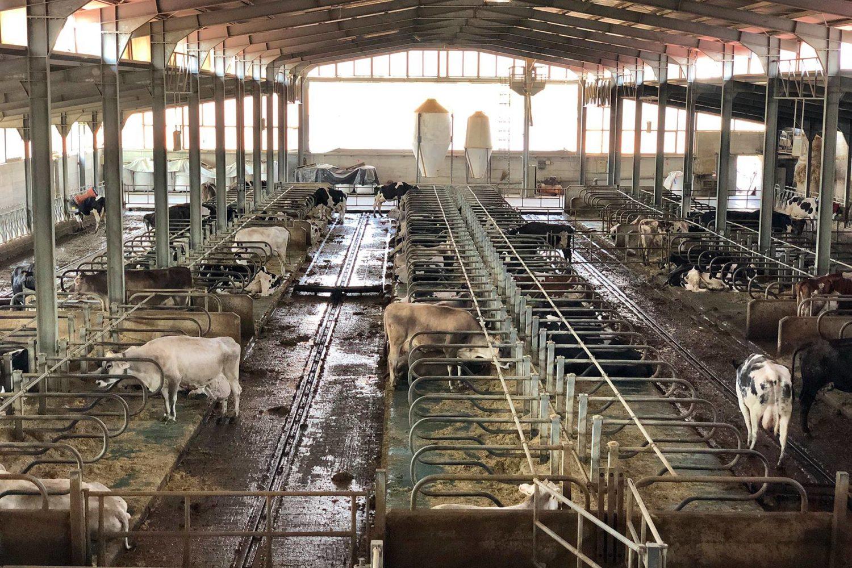 Visitare produzione di latte in Puglia