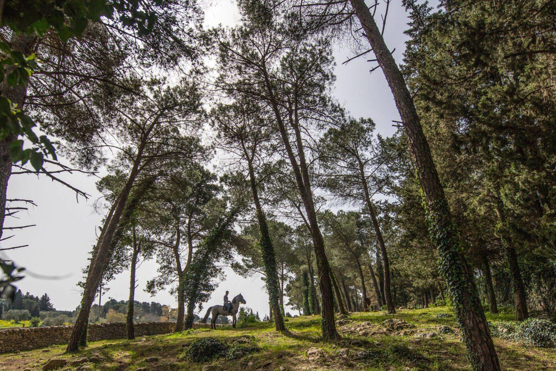 Passeggiata a cavallo con bambini Puglia