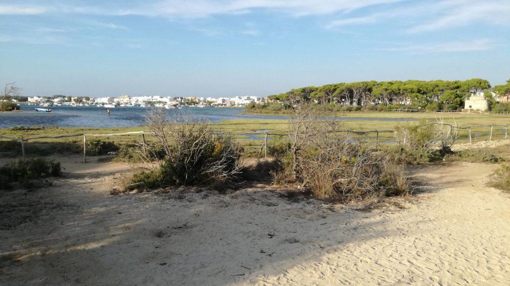 Modo più facile per arrivare sull'Isola dei Conigli di Porto Cesareo