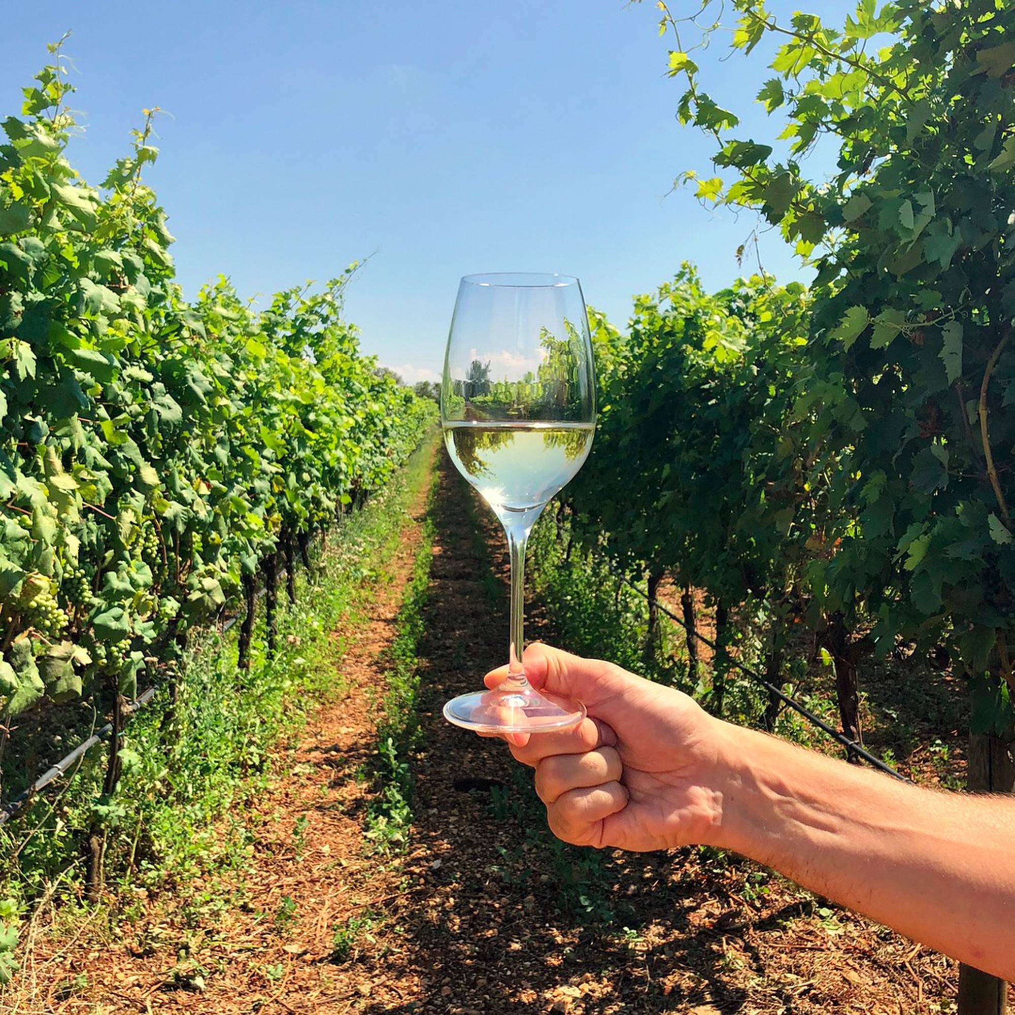 Vino bianco pugliese premiato