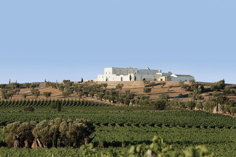 Azienda vinicola biologica in Puglia