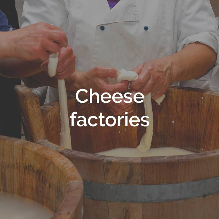 Cheese factories box Terra che Vive