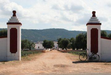 Tour dell'olio extra vergine di oliva in Puglia