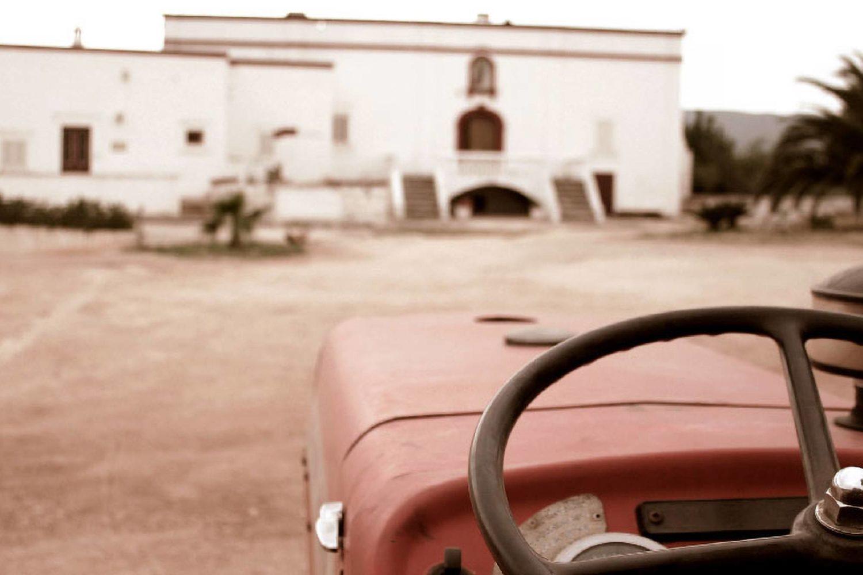 Organic oil farm in Puglia