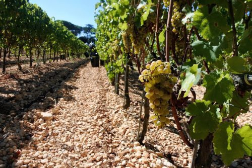 Tour del vino ad Ostuni - Puglia
