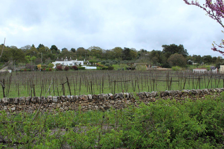 Wine tasting in vigneto Puglia
