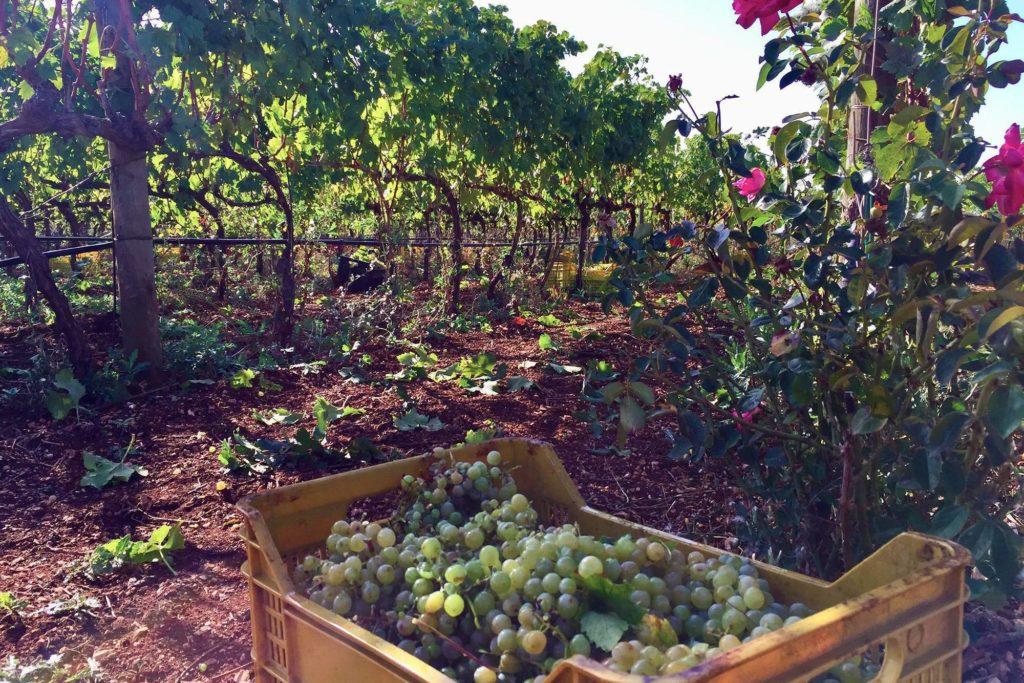 Wine tasting experience in Puglia