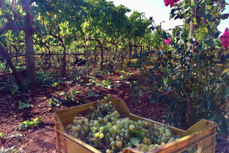 Wine tasting in Puglia