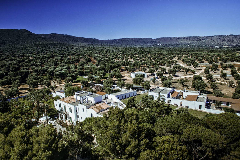 Olive oil trees tour in Puglia