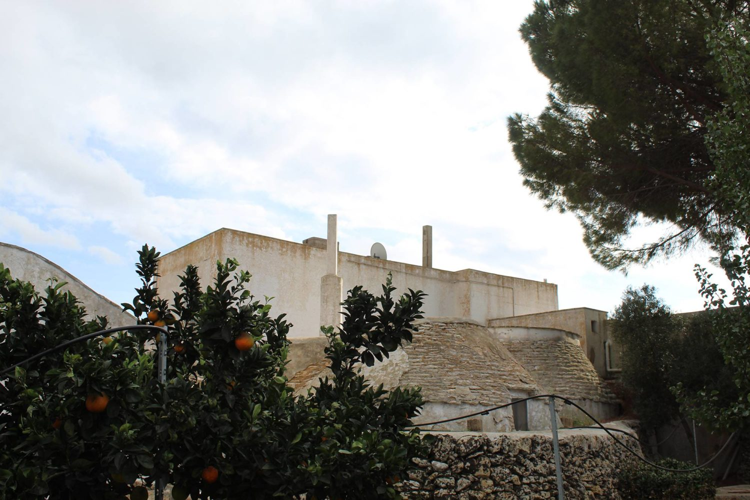 Ancient farm producing wine and olive oil