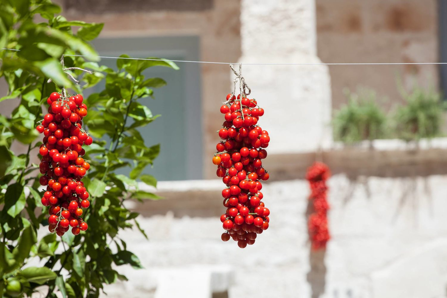 Apulian tomatoes tradition food