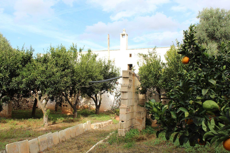 Citrus grove in Puglia