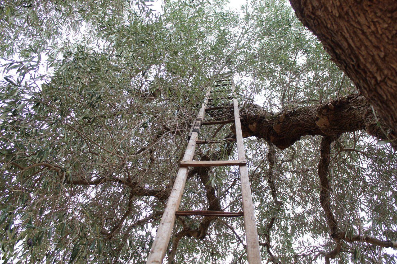 Olive oil mills in Puglia