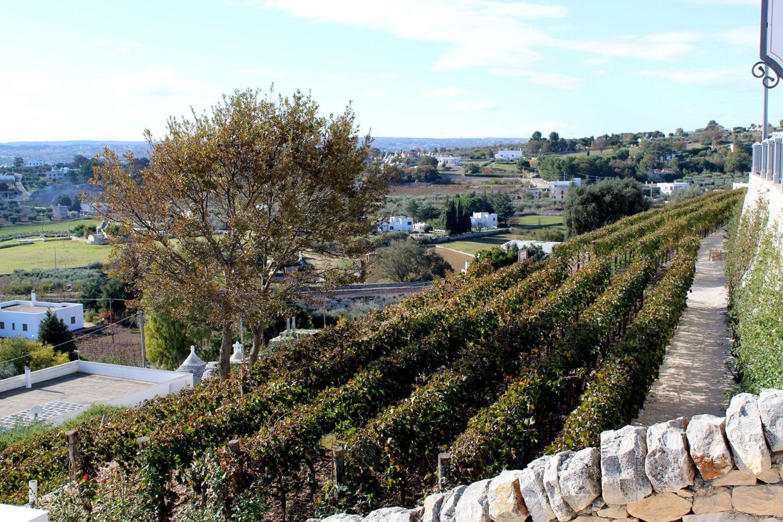 Authentic wine tasting Puglia