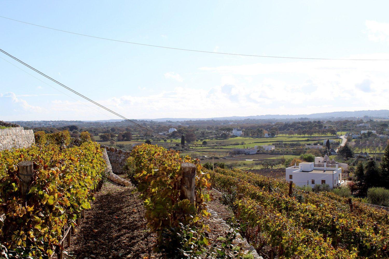 Best Puglia grapes