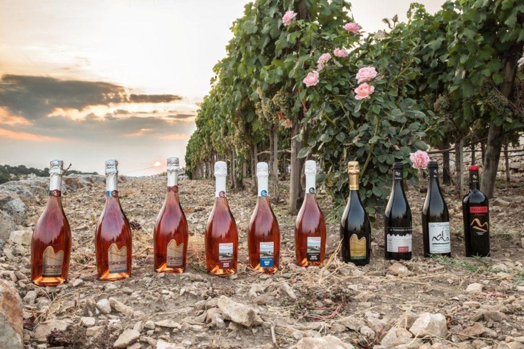 Best Puglia wines