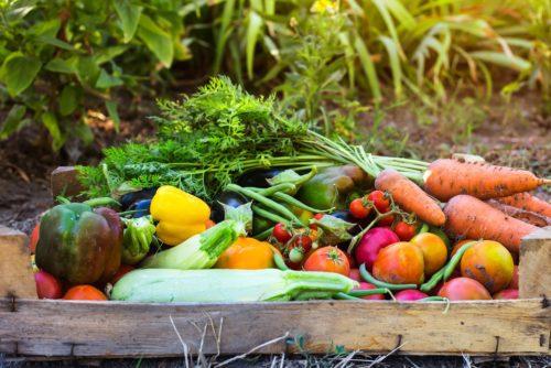 Vegetable from the garden