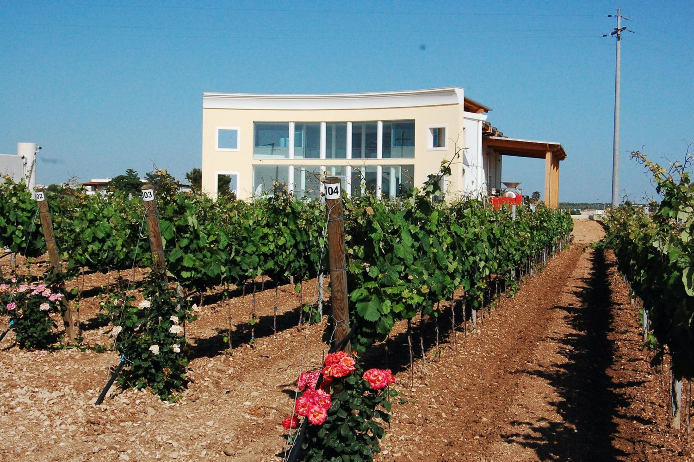 Visit vineyard Puglia