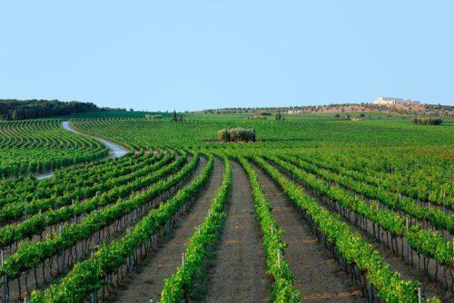 Wine tour puglia 2020